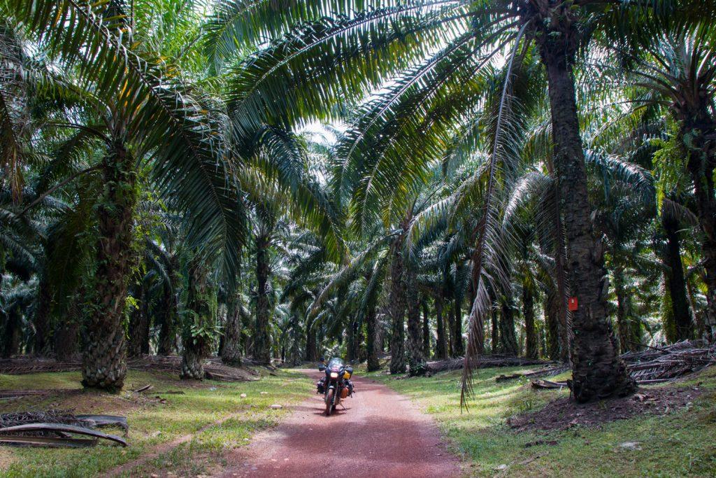 Schier unendliche Palmenhaine
